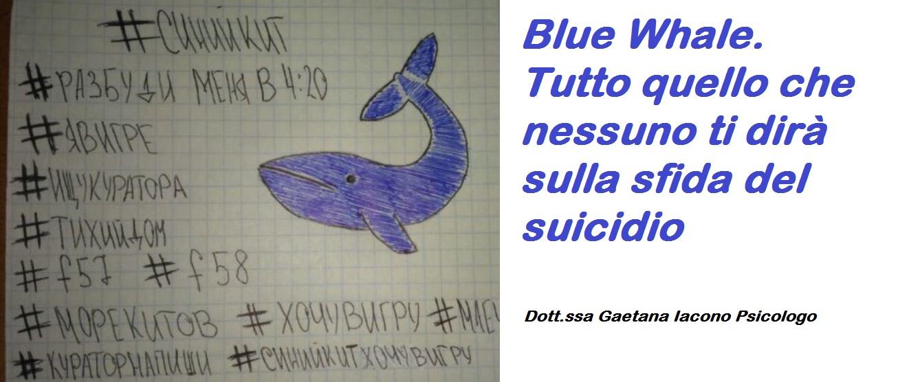 disegno di balena azzurra
